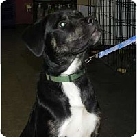 Adopt A Pet :: Diego - Surrey, BC