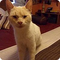 Adopt A Pet :: Simon - Norwich, NY