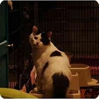 Adopt A Pet :: Sammy - Muncie, IN