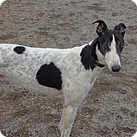 Adopt A Pet :: Everett - Roanoke, VA