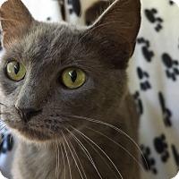 Adopt A Pet :: Squire - Floral City, FL