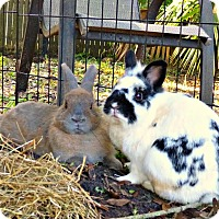 Adopt A Pet :: Benny and Smudge - Williston, FL