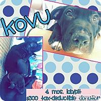 Adopt A Pet :: Kovu - Scottsdale, AZ