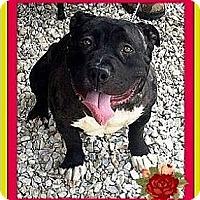 Adopt A Pet :: Petunia - West Los Angeles, CA