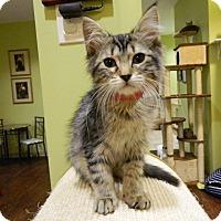 Adopt A Pet :: Lana - The Colony, TX