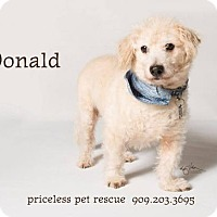 Adopt A Pet :: Donald - in Foster Care - Chino Hills, CA