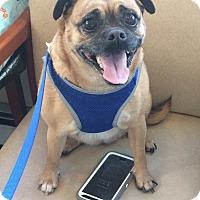 Adopt A Pet :: Lulu - Oak Ridge, NJ