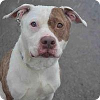 Adopt A Pet :: ISABELLA - Pittsburgh, PA