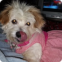 Adopt A Pet :: Misty - Sheridan, OR