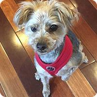 Adopt A Pet :: Annie - Fairfax, VA
