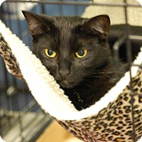 Adopt A Pet :: Vivi - Johnson City, TN