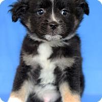 Adopt A Pet :: North Cali - Waldorf, MD