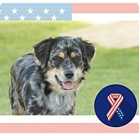 Adopt A Pet :: Tennyson - Hanover, PA