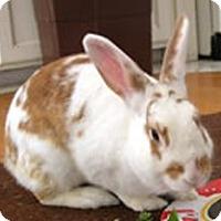 Adopt A Pet :: Aurora - Los Angeles, CA
