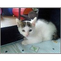 Adopt A Pet :: Lily - Catasauqua, PA