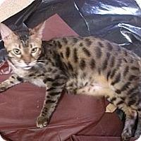 Adopt A Pet :: Mac - Lantana, FL