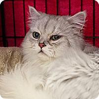 Adopt A Pet :: Zee - Beverly Hills, CA