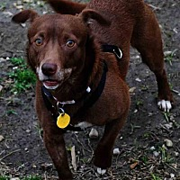 Adopt A Pet :: Riley K92-8885 - Thibodaux, LA