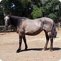 Adopt A Pet :: Mama G - El Dorado Hills, CA