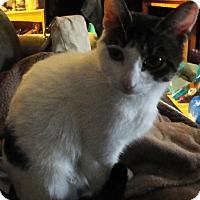 Adopt A Pet :: Daisy - brewerton, NY