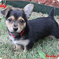 Adopt A Pet :: Boston - Rockwall, TX