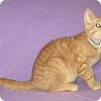 Adopt A Pet :: Newman - Powell, OH