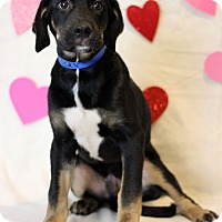 Adopt A Pet :: Rocky - Waldorf, MD