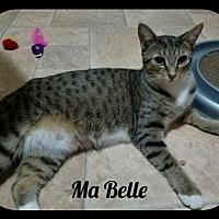 Adopt A Pet :: MaBelle (GP) 9.1.15 - Orlando, FL