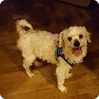 Adopt A Pet :: Gordon - Union Grove, WI