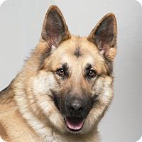 Adopt A Pet :: Gunner - Westfield, NY