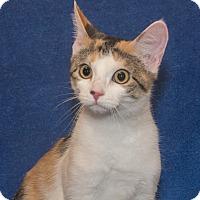 Adopt A Pet :: Lizzie - Elmwood Park, NJ
