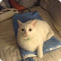 Adopt A Pet :: Jeffrey (COURTESY POST) - Baltimore, MD