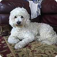 Adopt A Pet :: Lexie - Toronto, ON