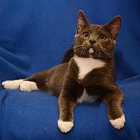 Adopt A Pet :: Osborne - Sanford, FL