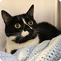 Adopt A Pet :: Lucy 35373839 - Westampton, NJ