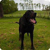 Adopt A Pet :: Marmaduke - Washington, PA