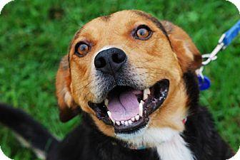 Beagle Mix Dog for adoption in Waldorf, Maryland - Joshua Hughes