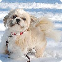 Adopt A Pet :: Theodore - Providence, RI