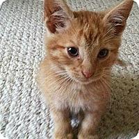 Adopt A Pet :: Emerson - Shavertown, PA