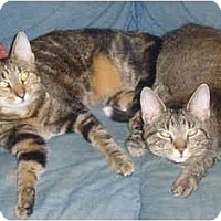 Adopt A Pet :: Angie & Tippy (DS) - Little Falls, NJ