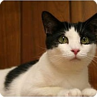 Adopt A Pet :: Gracie Mae - Naples, FL