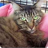 Adopt A Pet :: Molly Sue - Easley, SC