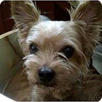 Adopt A Pet :: Missy Mae - Beechgrove, TN