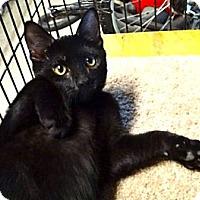Adopt A Pet :: Onyx - Escondido, CA