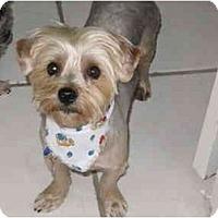 Adopt A Pet :: Maximo - Gulfport, FL