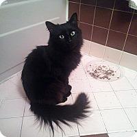 Adopt A Pet :: Sherry - Trevose, PA