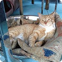 Adopt A Pet :: Annie - Brooklyn, NY