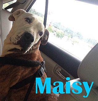 American Bulldog/Labrador Retriever Mix Dog for adoption in Orangeburg, South Carolina - Maisy