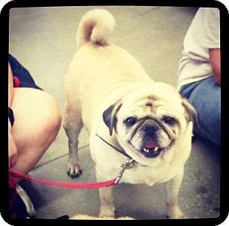 Pug Mix Dog for adoption in Grand Bay, Alabama - Lula