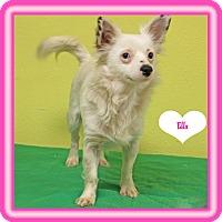 Adopt A Pet :: Ella - Hillsboro, TX